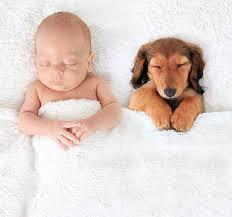 Baby & dog asleep.jpeg